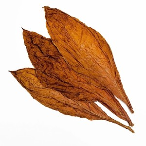 Tobacco leaf that Cain mentions could be used to help wounds, before plasters were available.